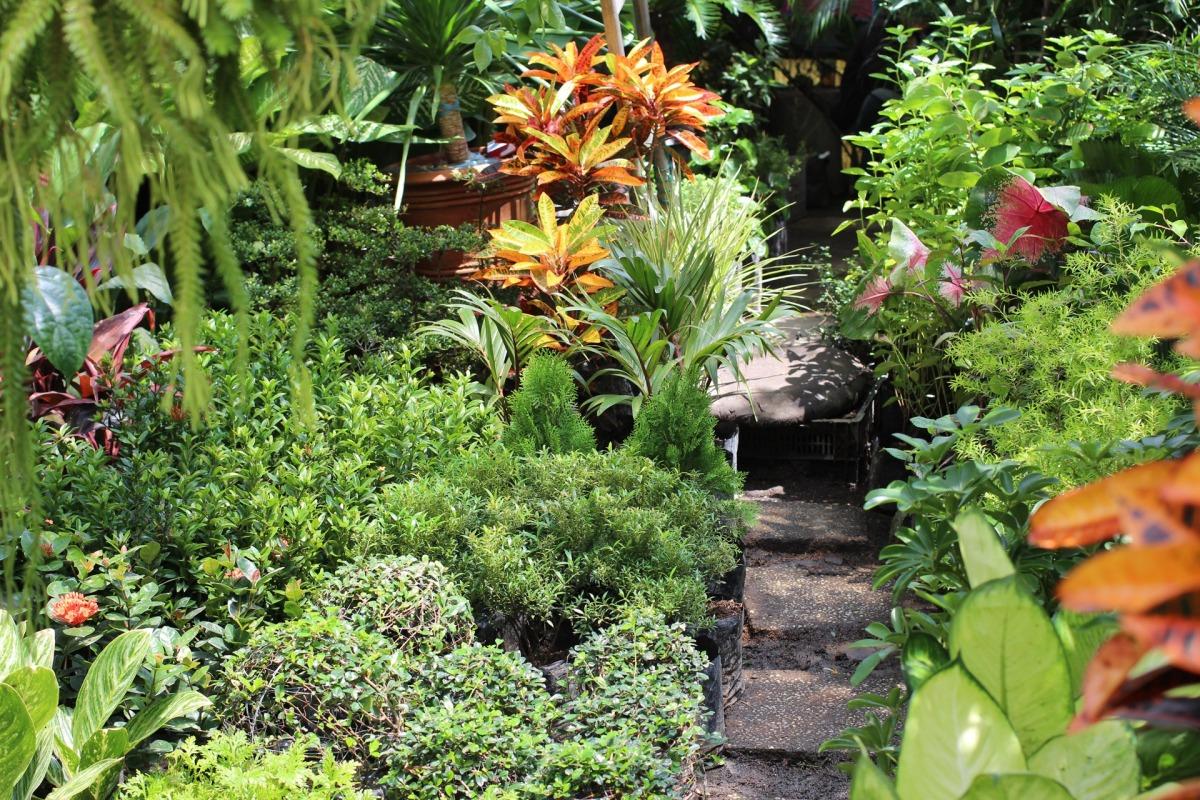 5 pest repelling plants every gardener needs ohio for Philippine garden plants